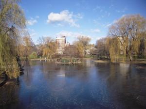 Lac (gelé) de centre-ville