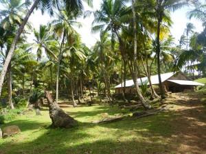 Une atmosphère polynésienne