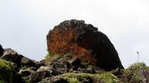 Algues rouges, caractéristiques du sommet.